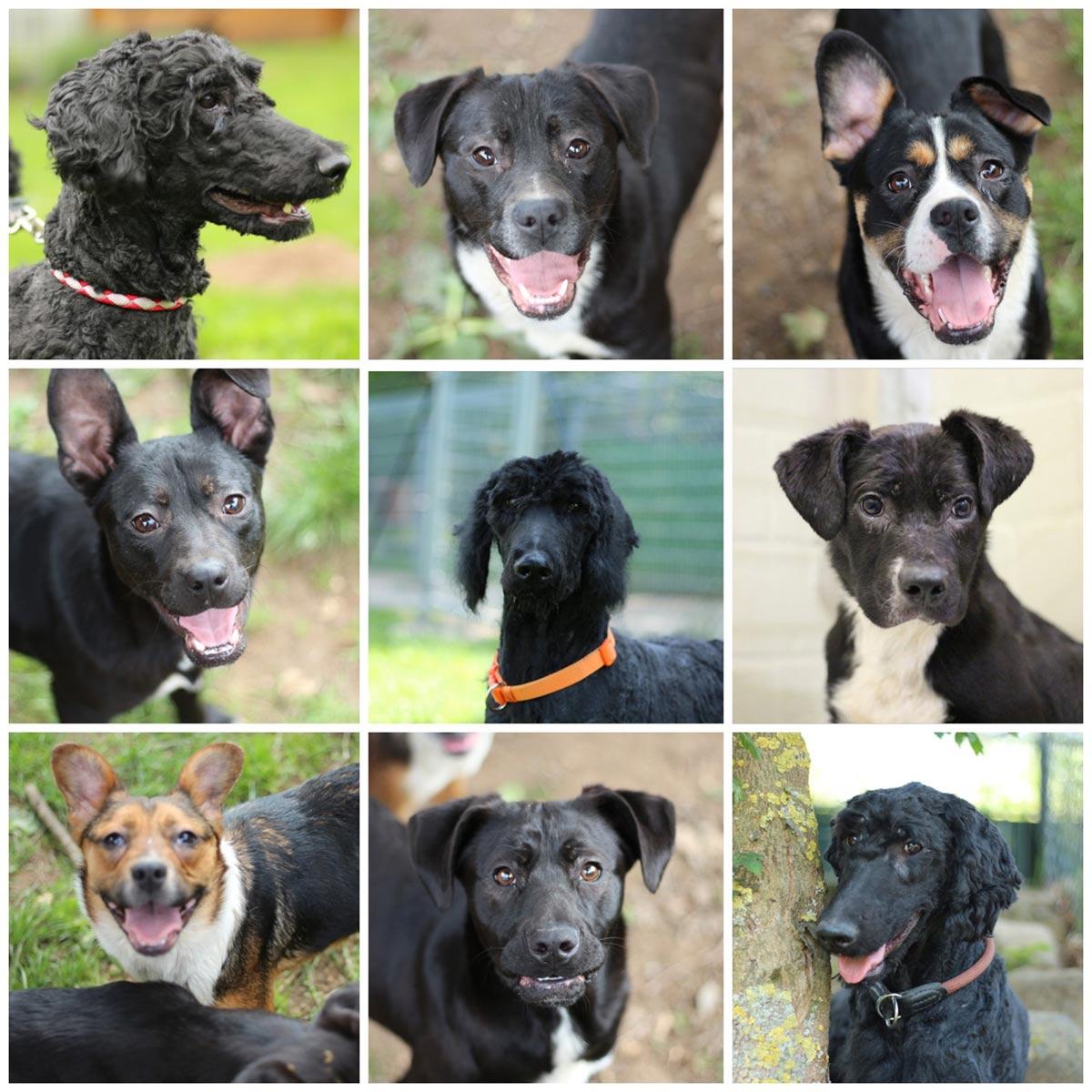 Ahnliches Foto Dogs Animals